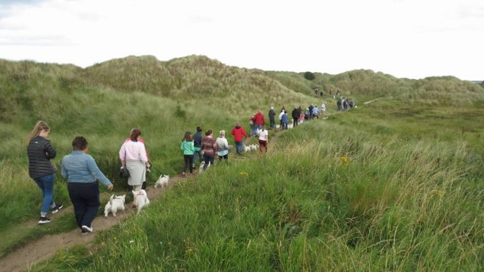Walkies time for Westies at Bamburgh | Coastal Connect